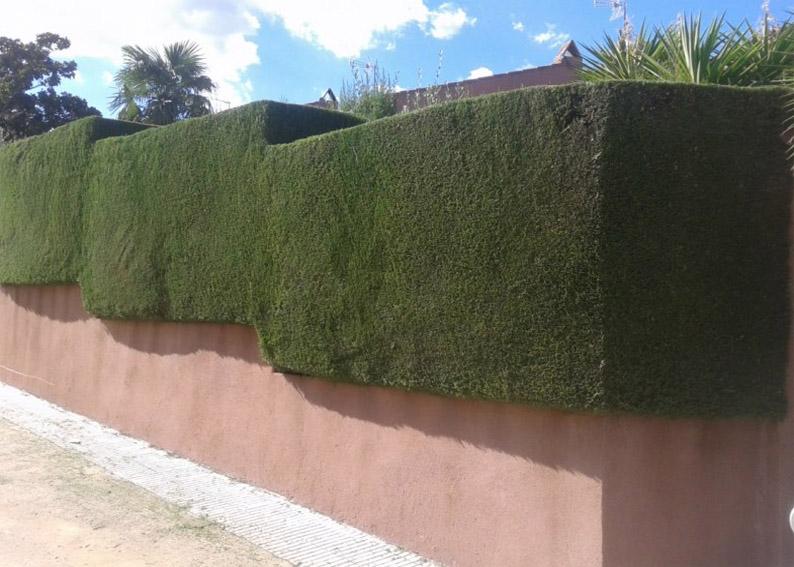 Mantenimiento de zonas verdes